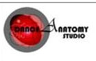 Companies in Lebanon: Dance Anatomy